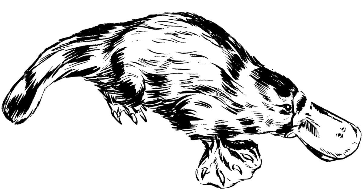 mammifere qui pond des oeufs