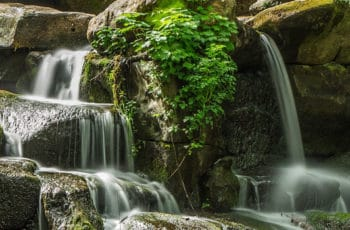 cascade de jardin