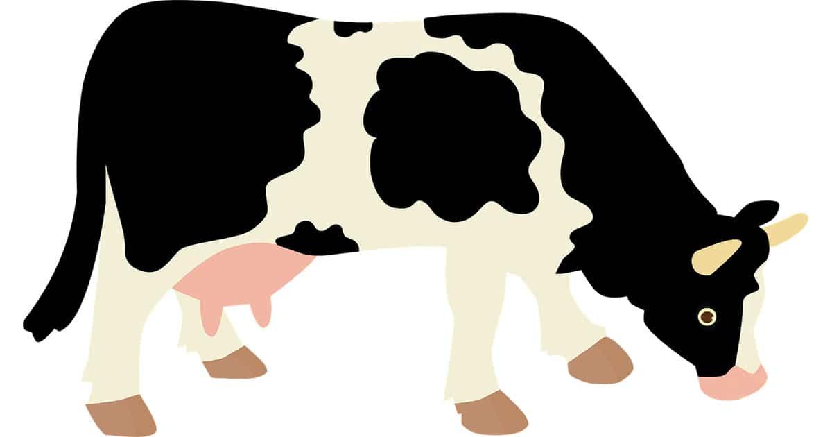 prix vache laitiere