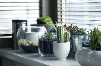 avoir une plante verte à la maison