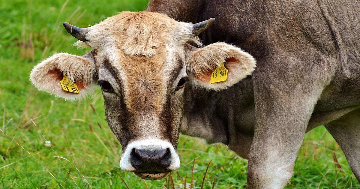 produits medicaments pour bovins