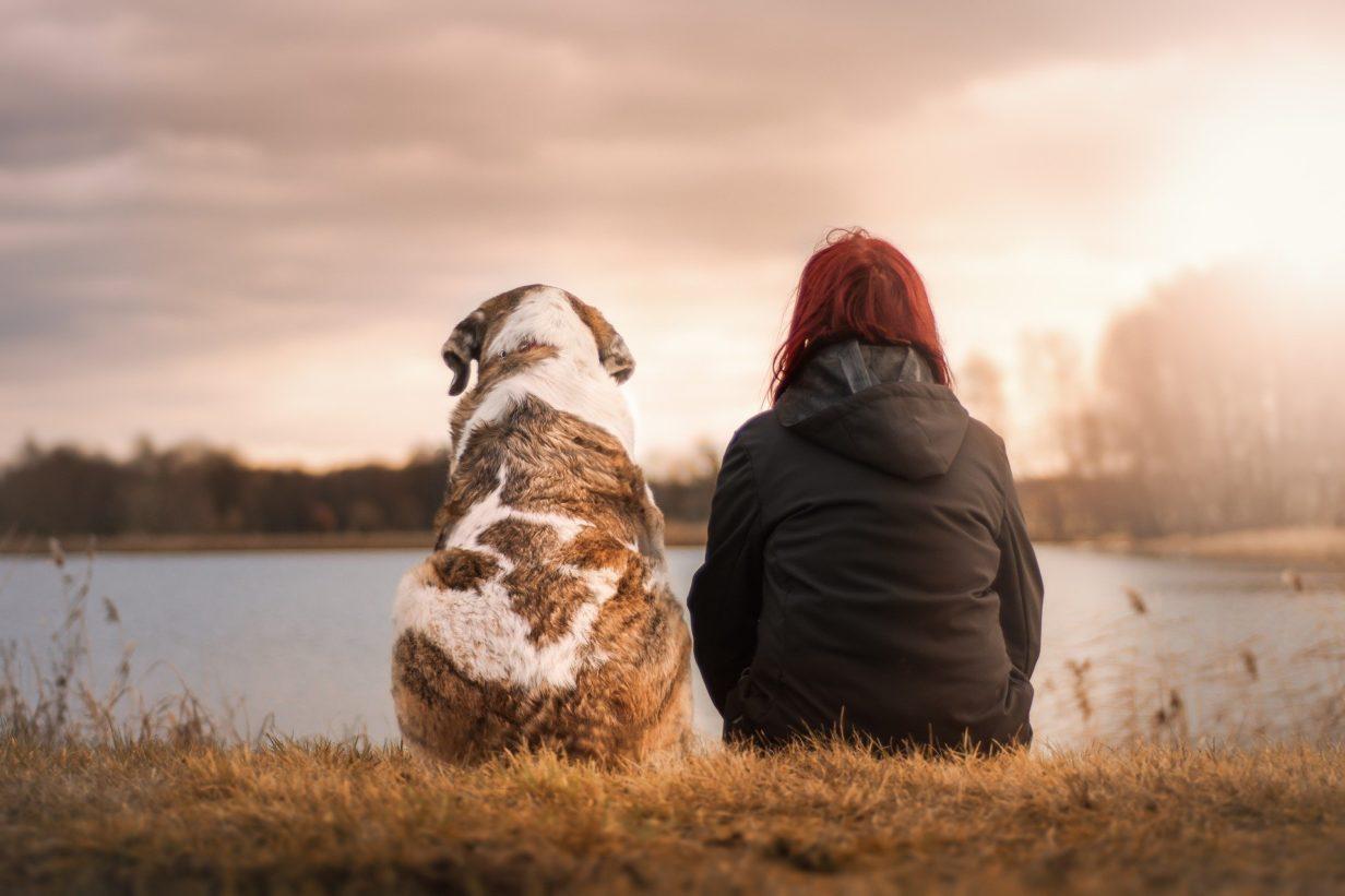 Précautions à prendre avant d'adopter un chien
